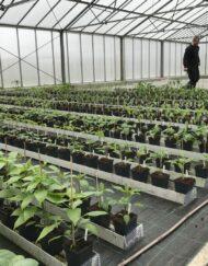 Chili Planter